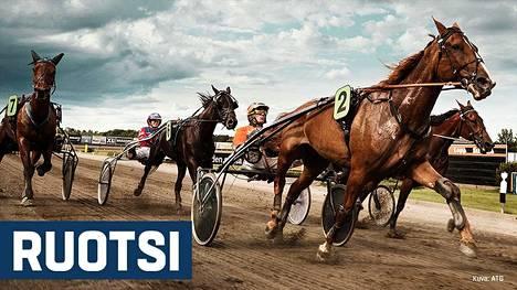 Ravivihje: Toto64 Gävle 15.3.2019 Ravivihjeet Urheilu